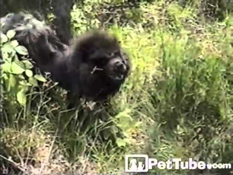 Thumbnail of video The SNEEZIEST Animals