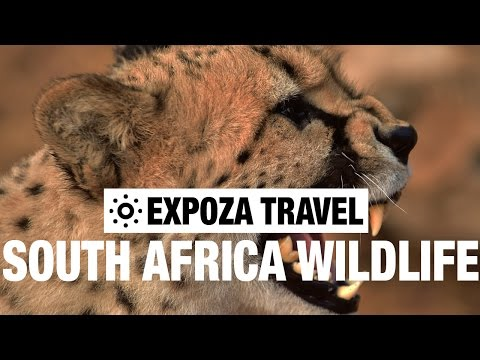South Africa's Wildlife Travel Video Guide