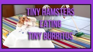 Tiny Hamsters Eating Tiny Burritos