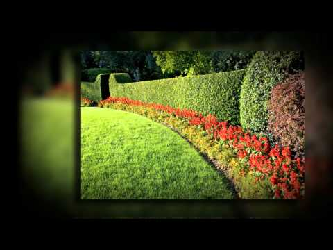 Lawn Care Frisco TX | Call 972-992-5296