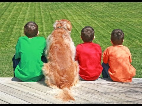 Dogs Might Protect Kids Against Asthma