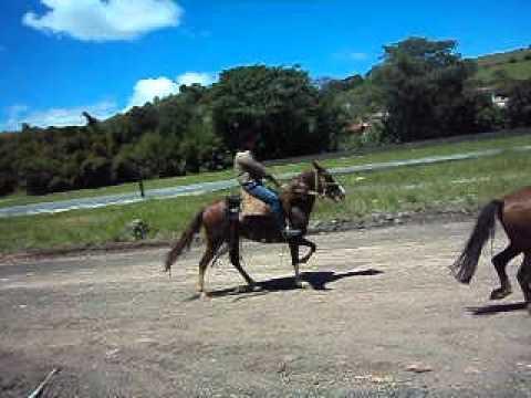 Égua lambari de cor alazã