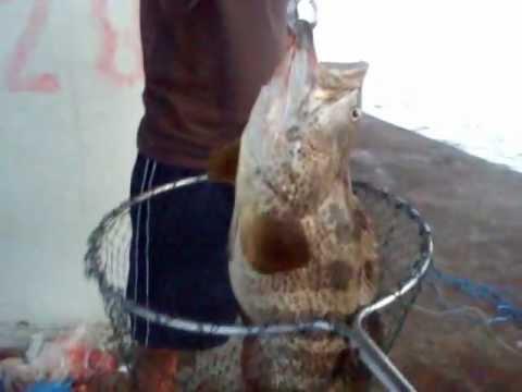 memancing di jambatan pulau pinang - kerapu 6kg