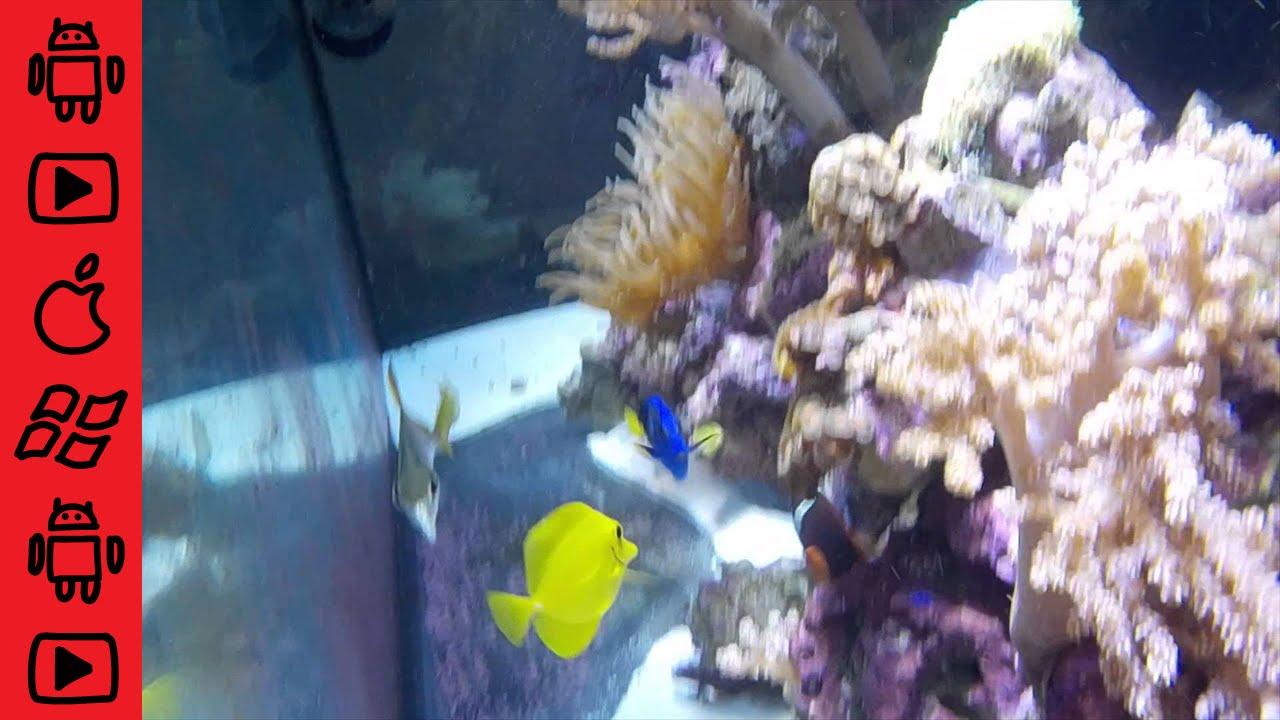 Nikon coolpix s32 waterproof camera inside of saltwater for Fish tank camera