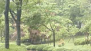 Early Morning Rain Lyrics Jerry Reed