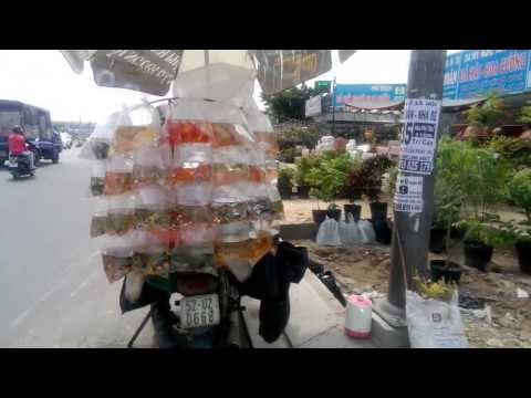 Aquarium Fish Store on a BIKE in Vietnam