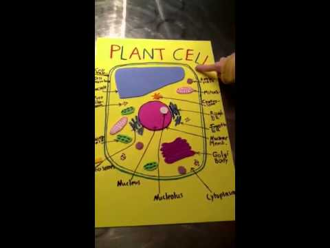 Wisconsin Fast Plants Lab Report