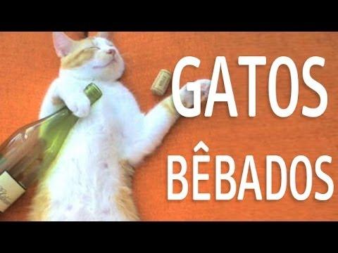 Os gatos mais engraçados BÊBADOS (Funny Cats), Cats
