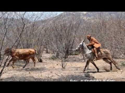 Se um dia eu deixar de ser vaqueiro
