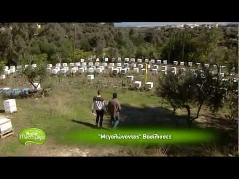 Βασιλοτροφείο - Μέλισσες
