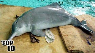 Top 10 Recently Extinct Animals