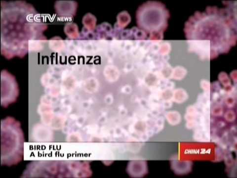 A bird flu primer