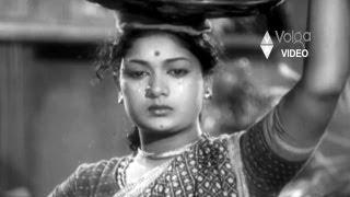 Donga Ramudu Songs Songs - Cherasala Palainava - ANR Savithri Jamuna