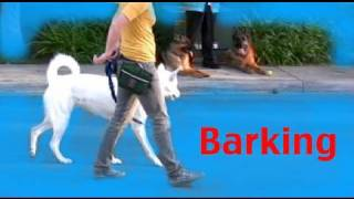 Stop Barking On A Walk Barking- Episode 3 Dog Training