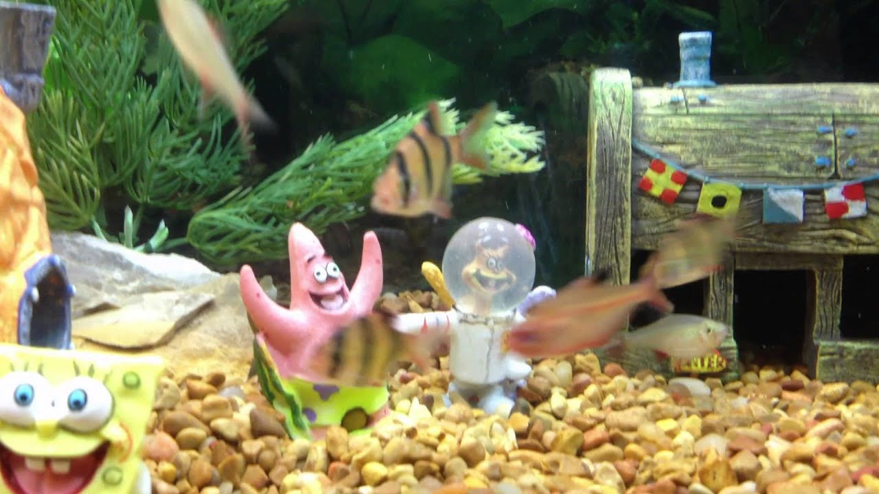 Spongebob fish tank youtube for Spongebob fish tank