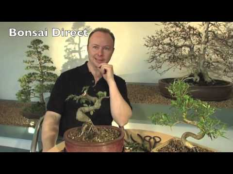 Bonsai Care with Lloyd Noall - Chapter 13 - Bonsai Roots and Re-potting