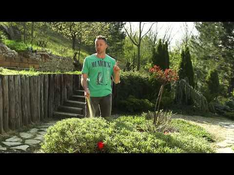 Takarékos öntözés a kertben