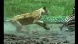 BBC Vida Selvagem 2000 Trailer
