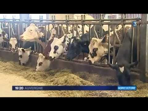 Coûts de production - Producteurs de lait