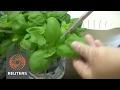 Electric shocks improve dried herbs taste