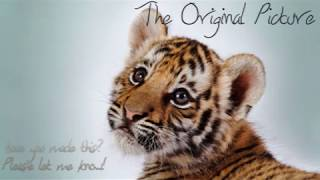 Drawing a Tiger Cub