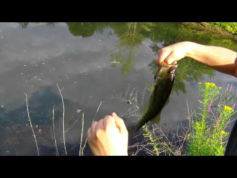 Fishing big bass pond creek lake for Fishing worms near me