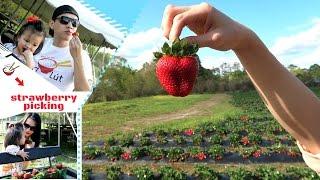 Đi Hái Và Bợ Dâu Tây | Strawberry Picking