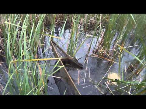 BIG LAKE | Springtime, Šunes JET FISH