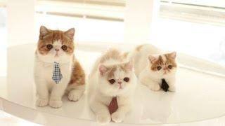 Three Kittens Wearin Ties, Looking for Jobs