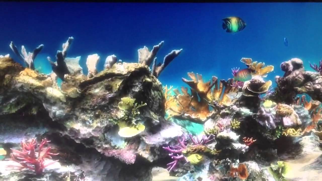 Live Aquarium HD - YouTube