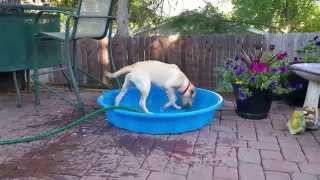 Happy Dog Fills Her Own Pool