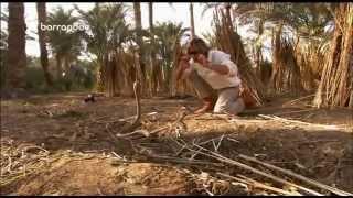 Pán hadov - Kobra egyptská
