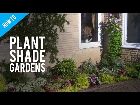 A Guide To Shade Gardening & Shade Garden Plants