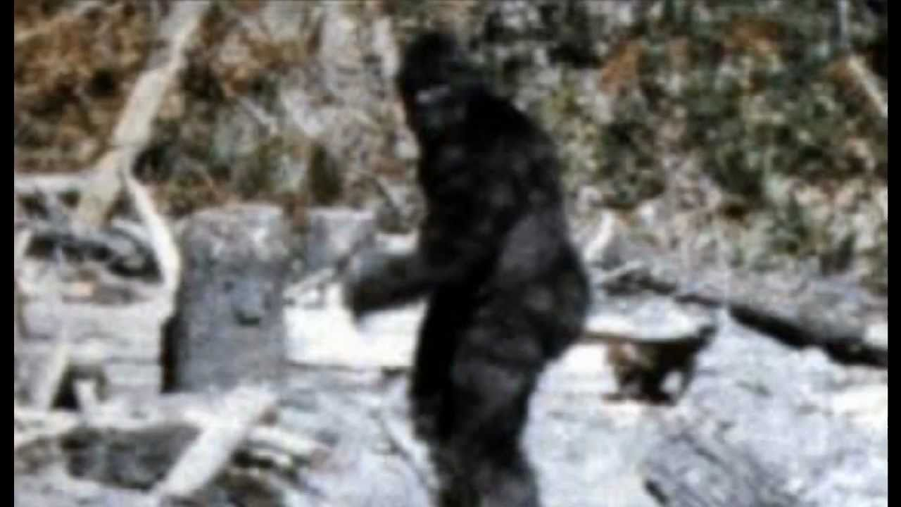 bigfoot a mystery Full list of jacob jones and the bigfoot mystery (vita) trophies and guides to unlock them the game has 20 trophies (19 bronze and 1 silver) and takes around 4-5.