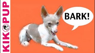How To Train Your Dog Not To Bark- Episode 1 Barking At