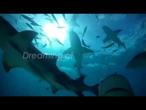 Dreaming of SHARKS