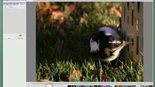 Creating A Movie With Photos And Music Using Picasa