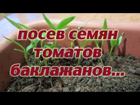 Самый на и простейший и ленивый способ посадки семян томатов, баклажан и сладких перцев!