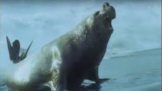 Attenborough: Elephant Seals