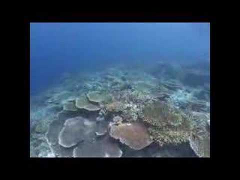 Immersione a SIPADAN parte 3 di 3 (Malesia)
