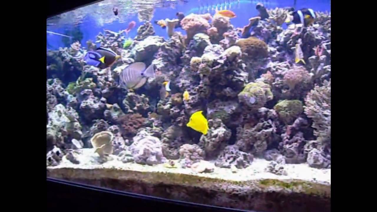 220 gallon reef aquarium fish feeding youtube for 220 gallon fish tank