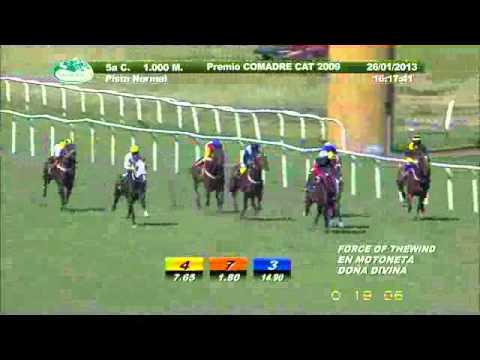 Vidéo de la course PMU PREMIO COMADRE CAT