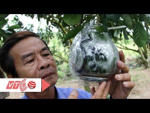 'Ra lò' 600 trái bưởi in bản đồ Việt Nam | VTC