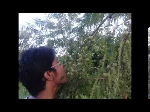 Bangla Music Video part 2 2)