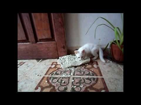 Funny Cats Compilation - Funny Cat Videos Ever- Funny Videos - Funny Animals - Funny Animal Videos 2