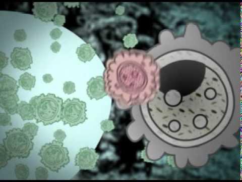 Birth Animation - Scene 5