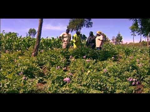 Shamba Shape Up (English) - Chickens, Farm Plan, Potatoes, Corgettes Thumbnail