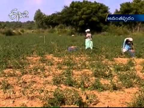 Farmers in Anantapuram district becoming success through Group farming