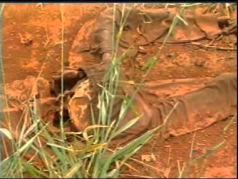 Ossada é encontrada na MG-452, próximo a Tapuirama