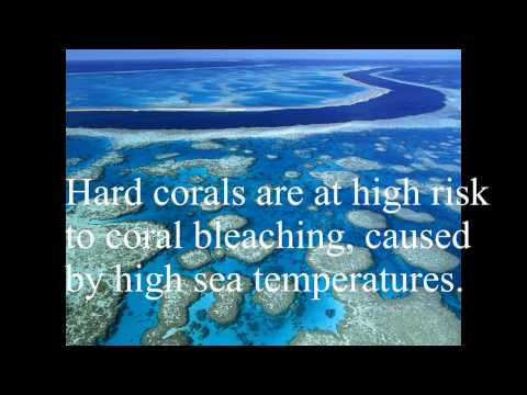 effect of climate change on great barrier reef